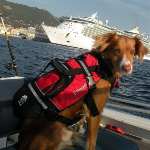 Crewsaver Pet Float Dog Lifejacket Onboard